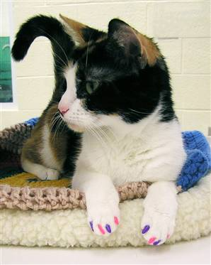 declawing cats humane - photo #26