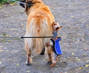 Dog Humping Why Dogs Do It And What You Can Do To Stop It