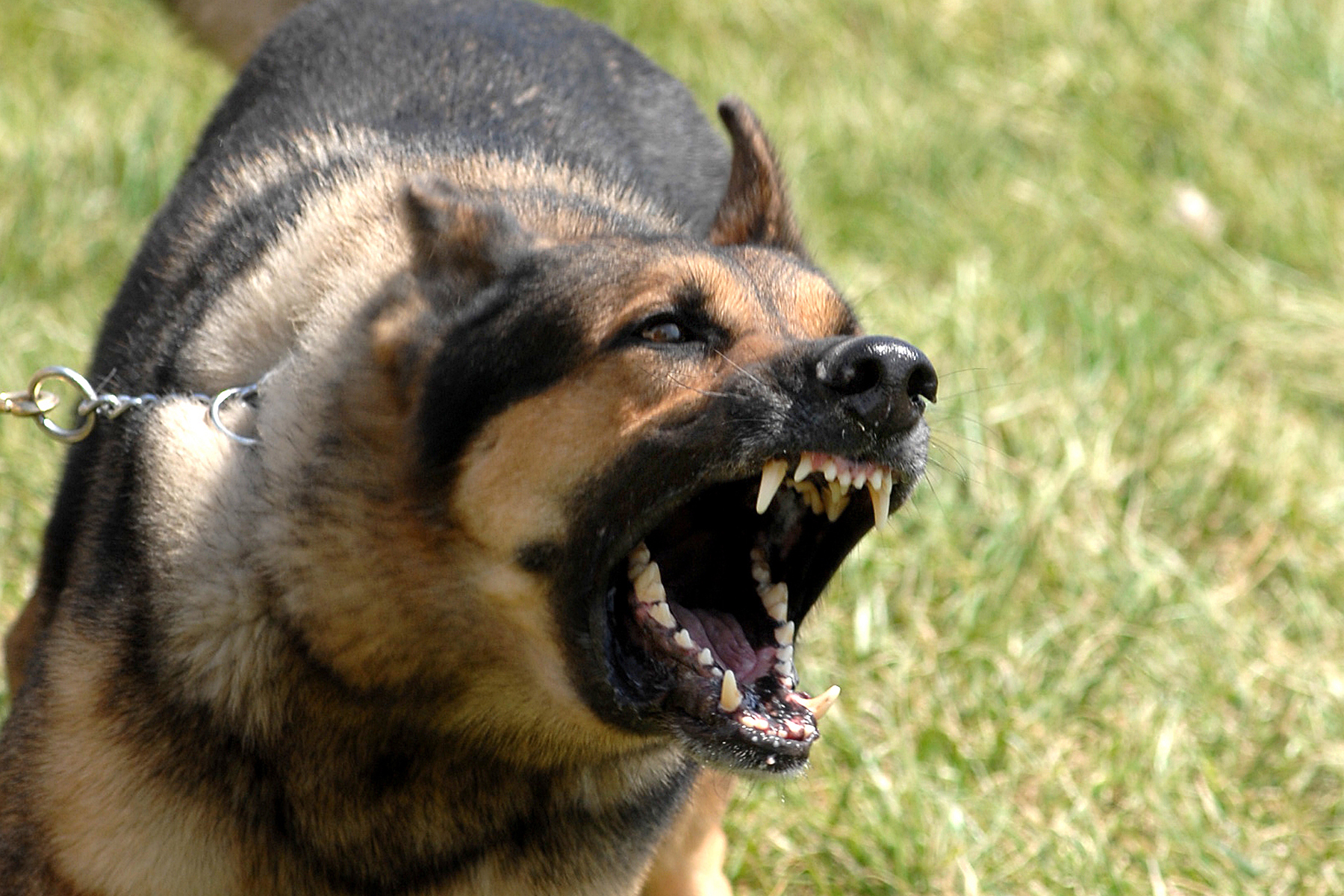 How To Quickly Stop Dog Barking