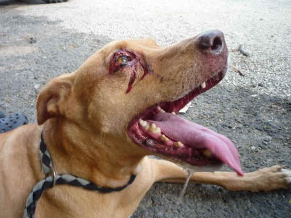 Dog and Cat Bleeding: What To Do To Stop It Fast