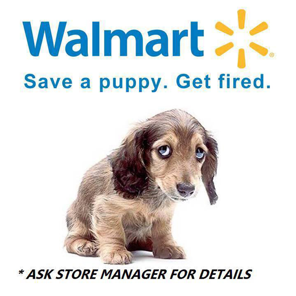 Wal-mart fires employee for reporting dog locked in parked