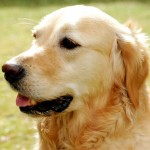 Top 6 Things You Can Do Now To Prevent Your Dog From Getting Cancer