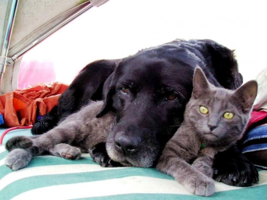 Pets With Alzheimers: 7 Solutions for Cognitive Dysfunction