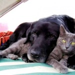 7 Remedies To Give If Your Dog Or Cat Is Not Eating