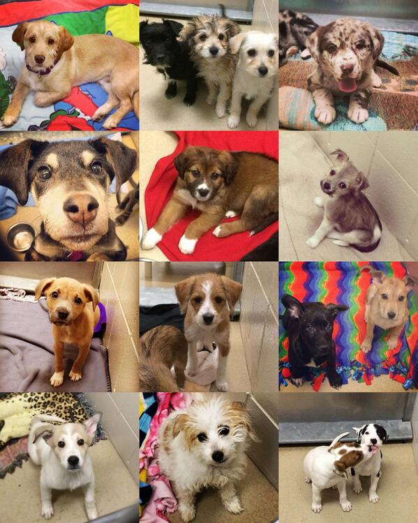 pupcollage