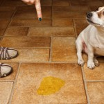How To Stop Dog Urinary Incontinence With Holistic Options