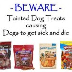 Are Comfortis and Trifexis killing dogs?: FDA records 340 dog deaths associated with these drugs.