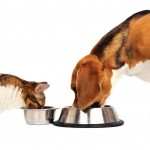 Fat Dog or Fat Cat?  6 Supplements To Speed Weight Loss