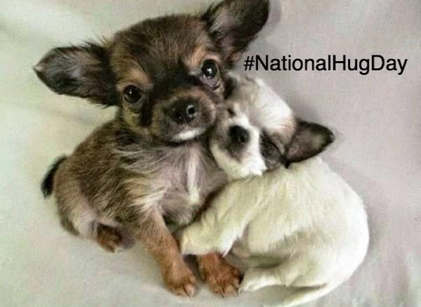 National Hug Day Great Animal Hugging Pics Veterinary