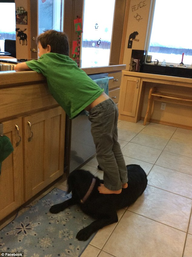 Palin kid stepping on dog
