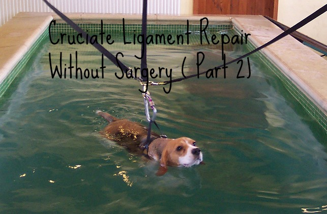 Dog Cruciate Ligament Rupture Healing Without Surgery