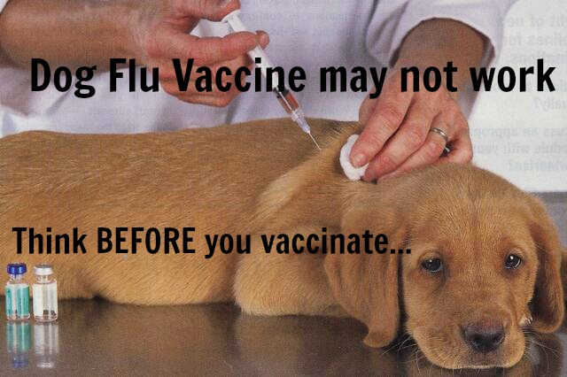 puppy_getting_vaccinated