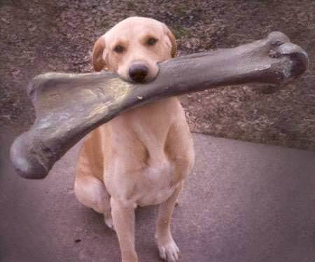 Video Should You Give Your Dog Bones Veterinary