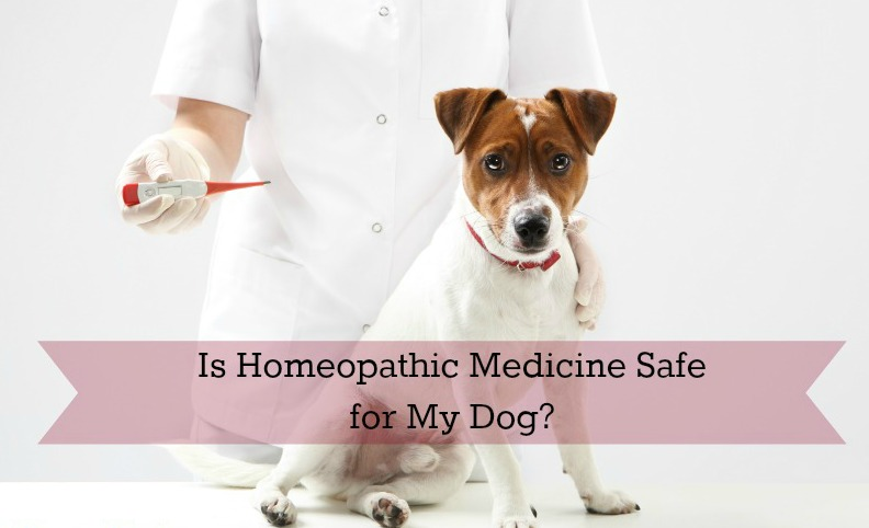 homeopathy dog
