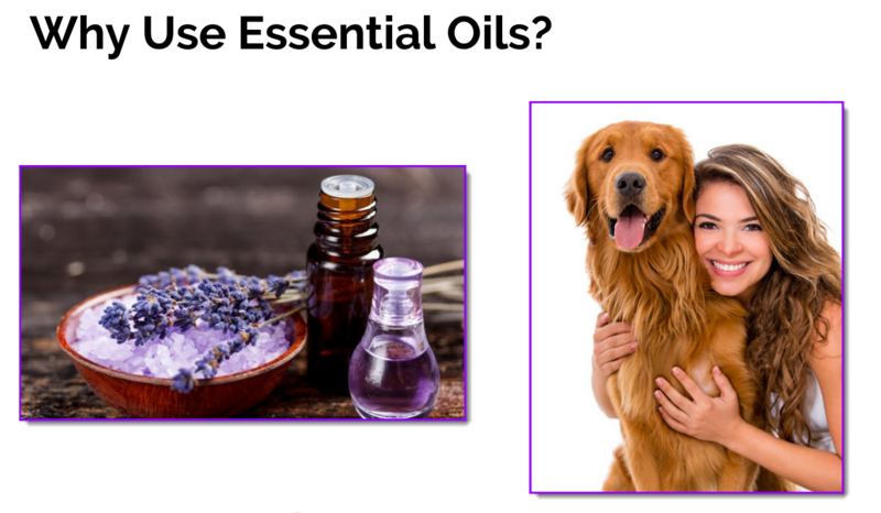 essential oils pet