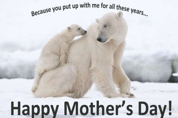 Happy-Mothers-Day-Animals-1