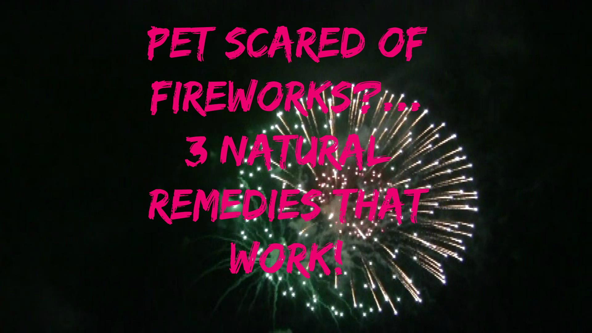 How To Get Dog To Stop Barking At Fireworks
