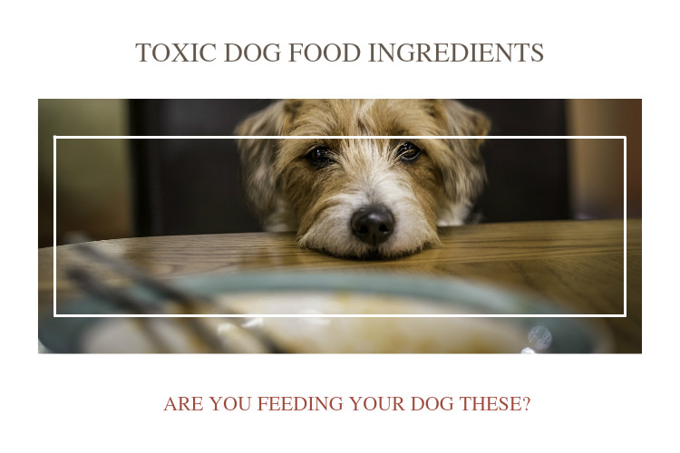 Bha Free Dog Food
