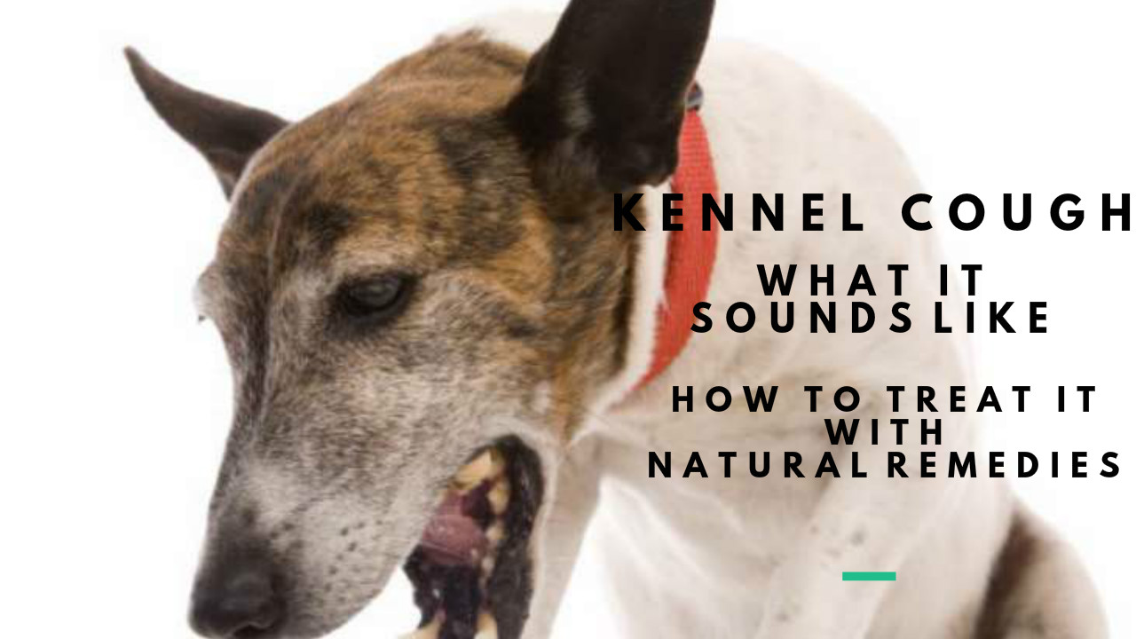 Kennel Cough Dogs And Cats