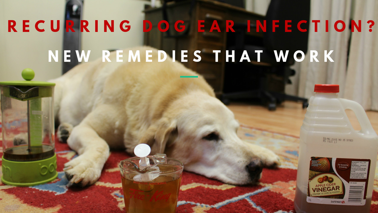 Top Dog Foods For Ear Infections