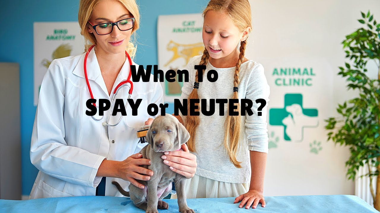 Don't Spay and Neuter Your Dog?
