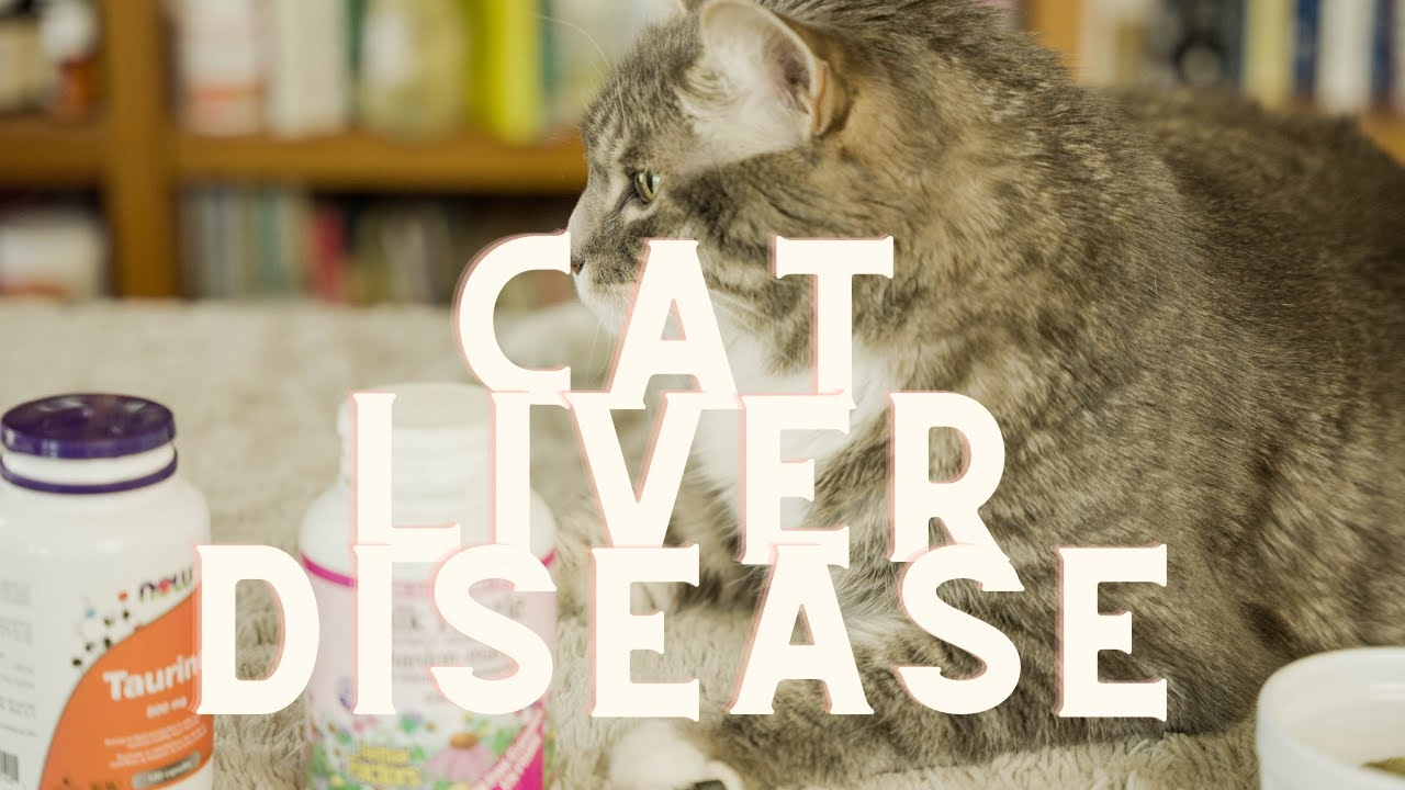 Liver Disease In Cats: Hepatic Lipidosis