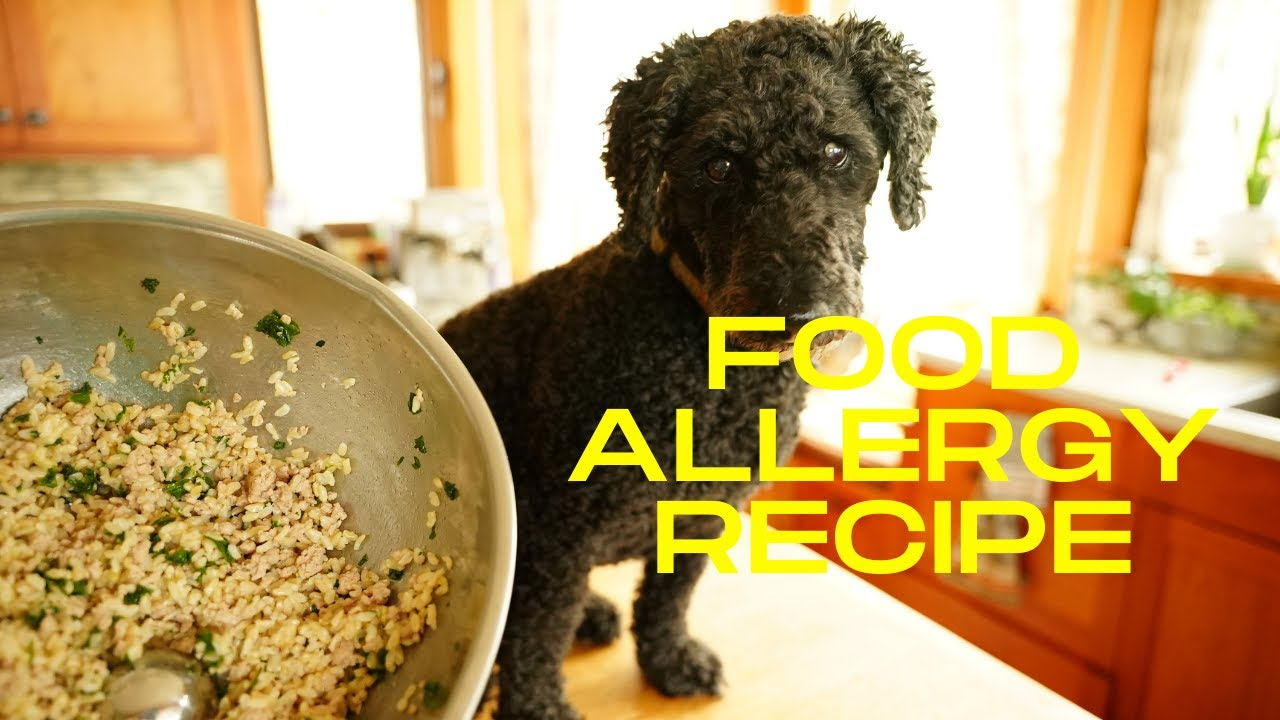 Best Dog Food Allergy Test
