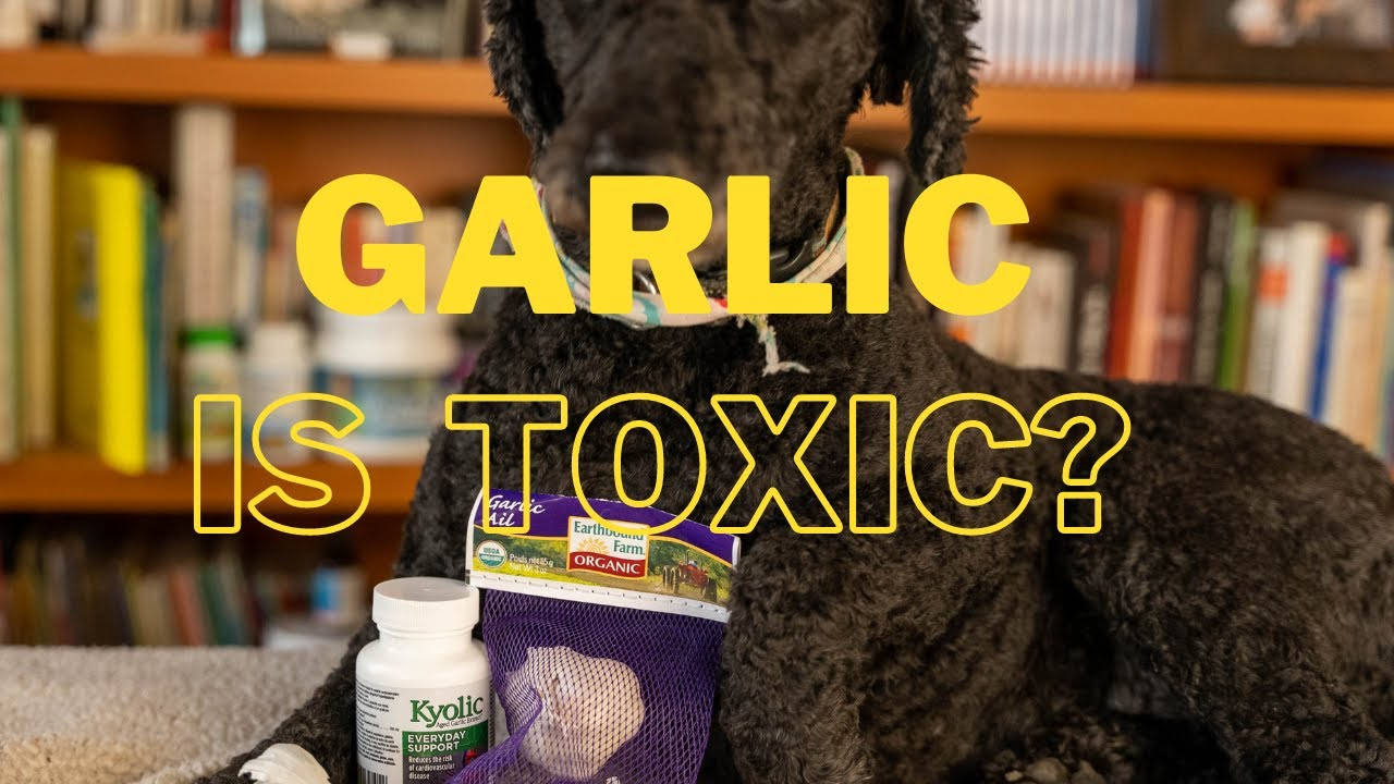 Garlic Is Bad For Dogs