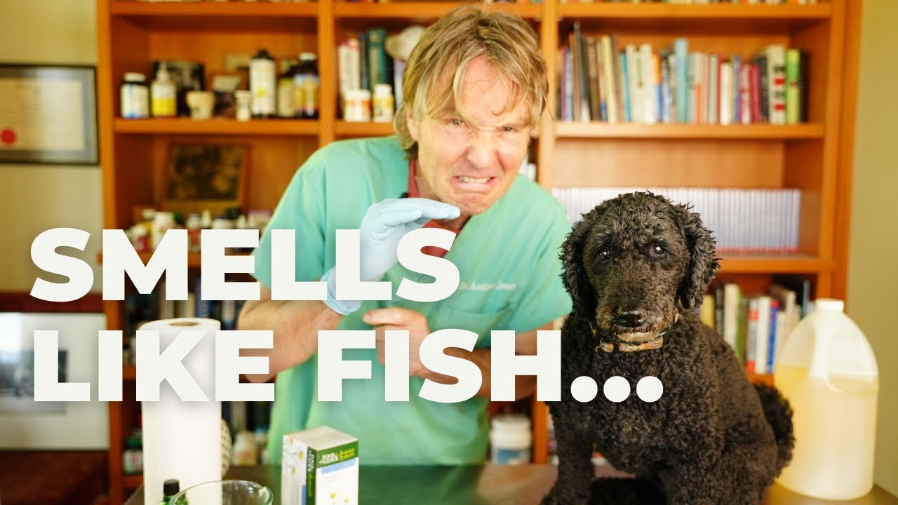Why Your Dog Smells Like Fish: Natural Remedy