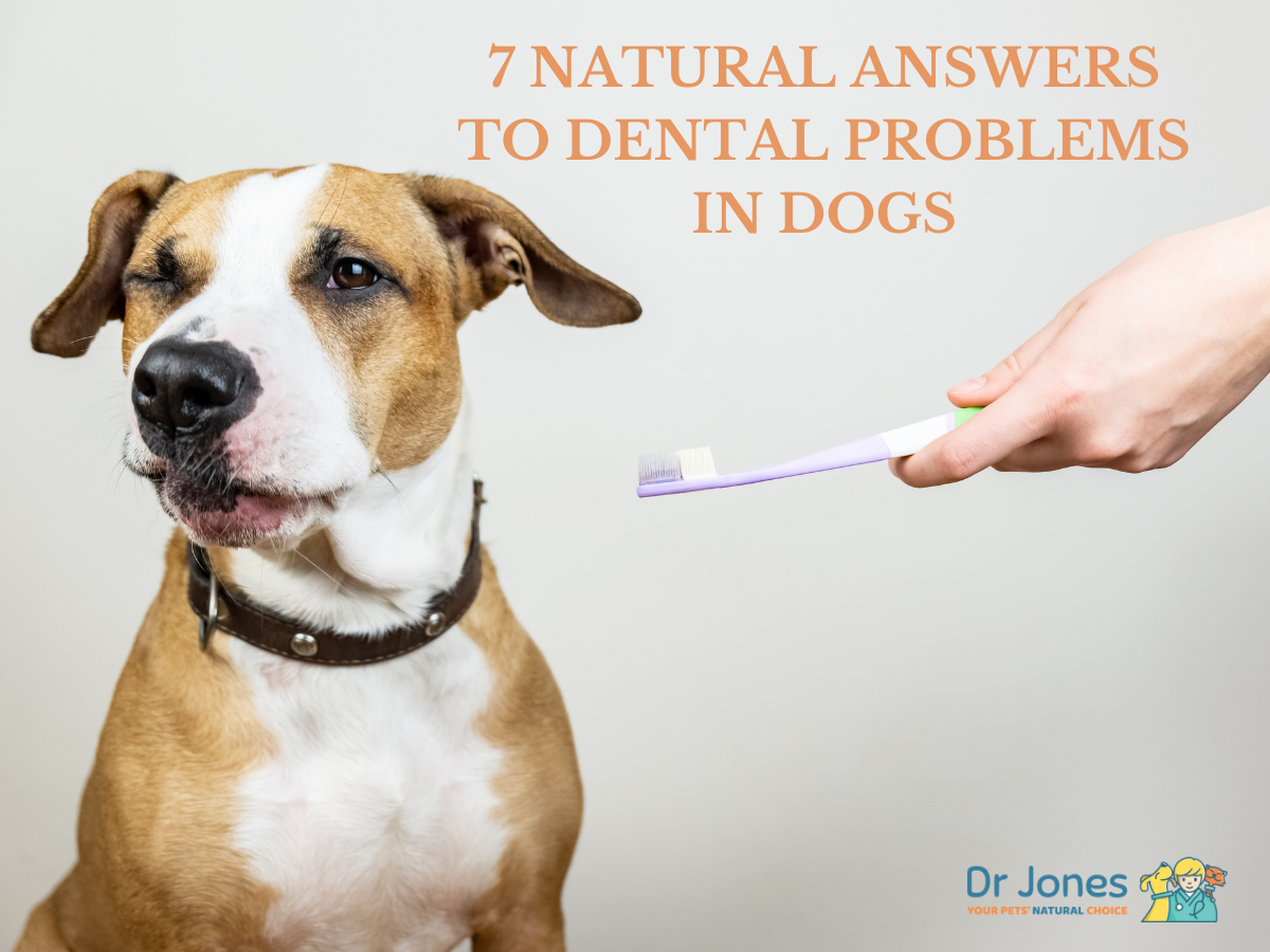 7 Natural Answers to Dental Problems in Dogs