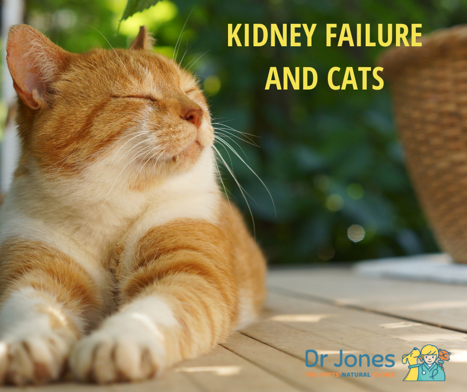 Kidney Failure and Cats