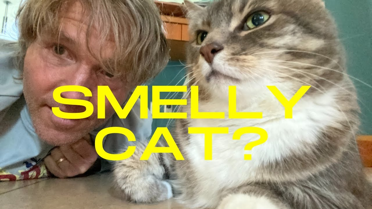 Smelly Cat? Top Stinky Cat Remedies