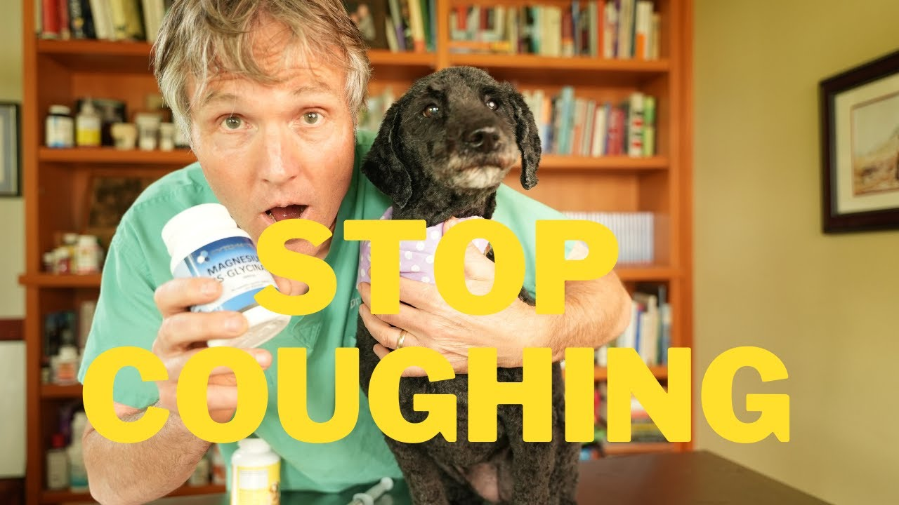 Coughing Dog? Try this NEW Remedy