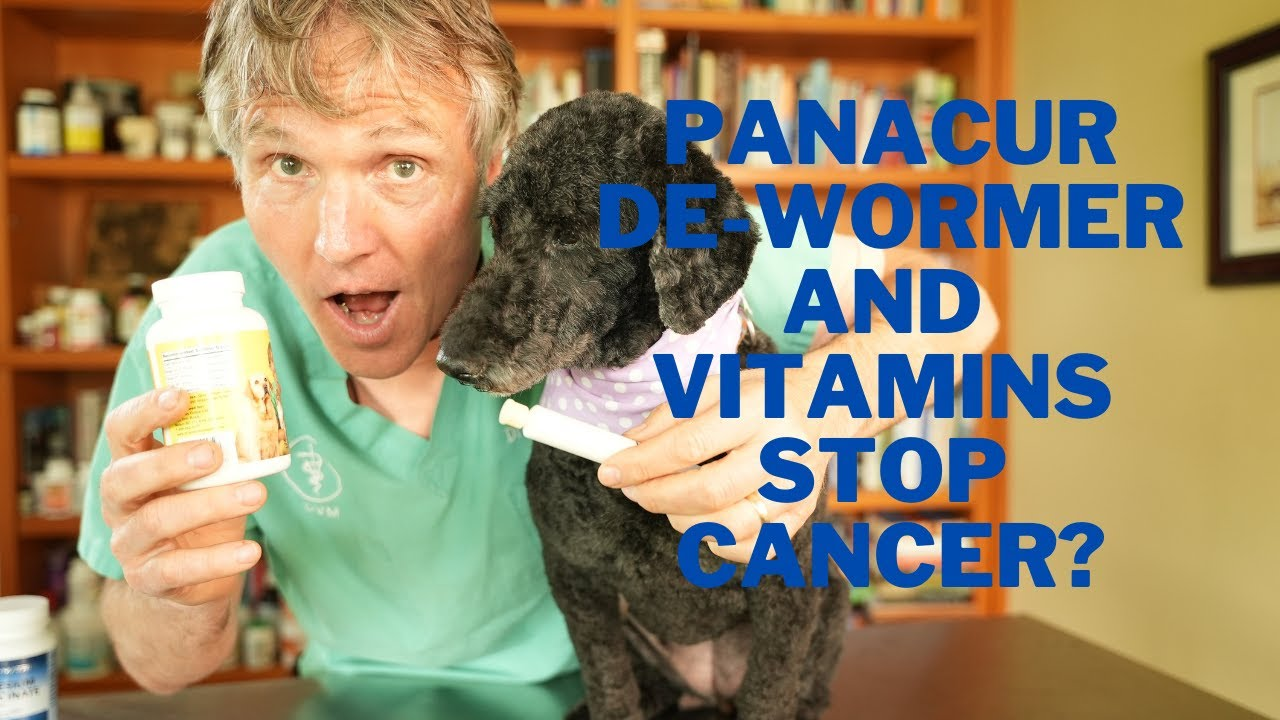 Panacur and Antioxidant Vitamins Stop Cancer