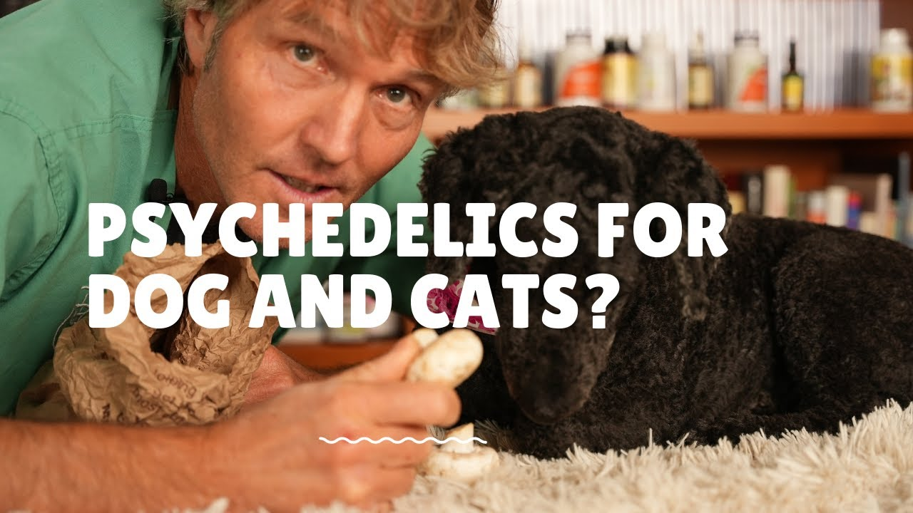 Psychedelics for Pets