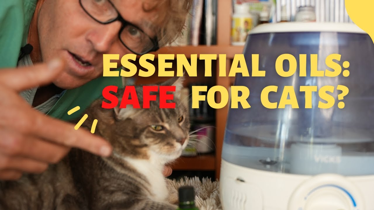 Are Essential Oils Safe for Cats?