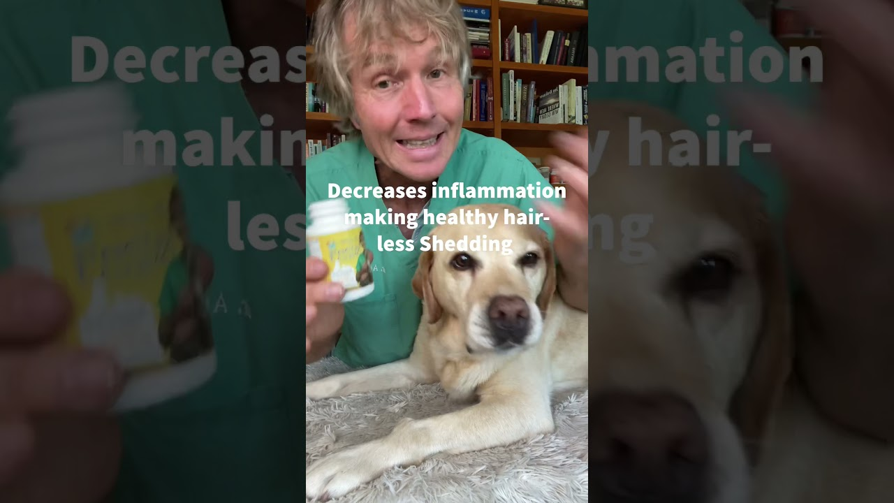 Dog Shedding like Crazy? Try these Home Remedies! #shorts