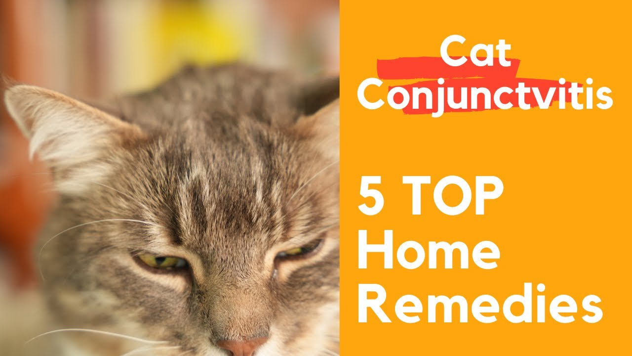 Cat's Eyes swollen and watery: Cat Conjunctivitis Treatment