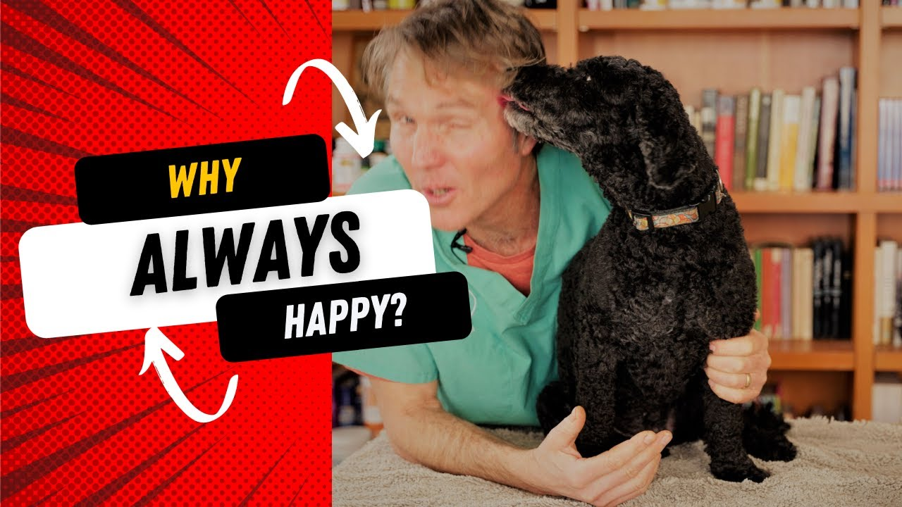 Why Is Your Dog Happier Than You?