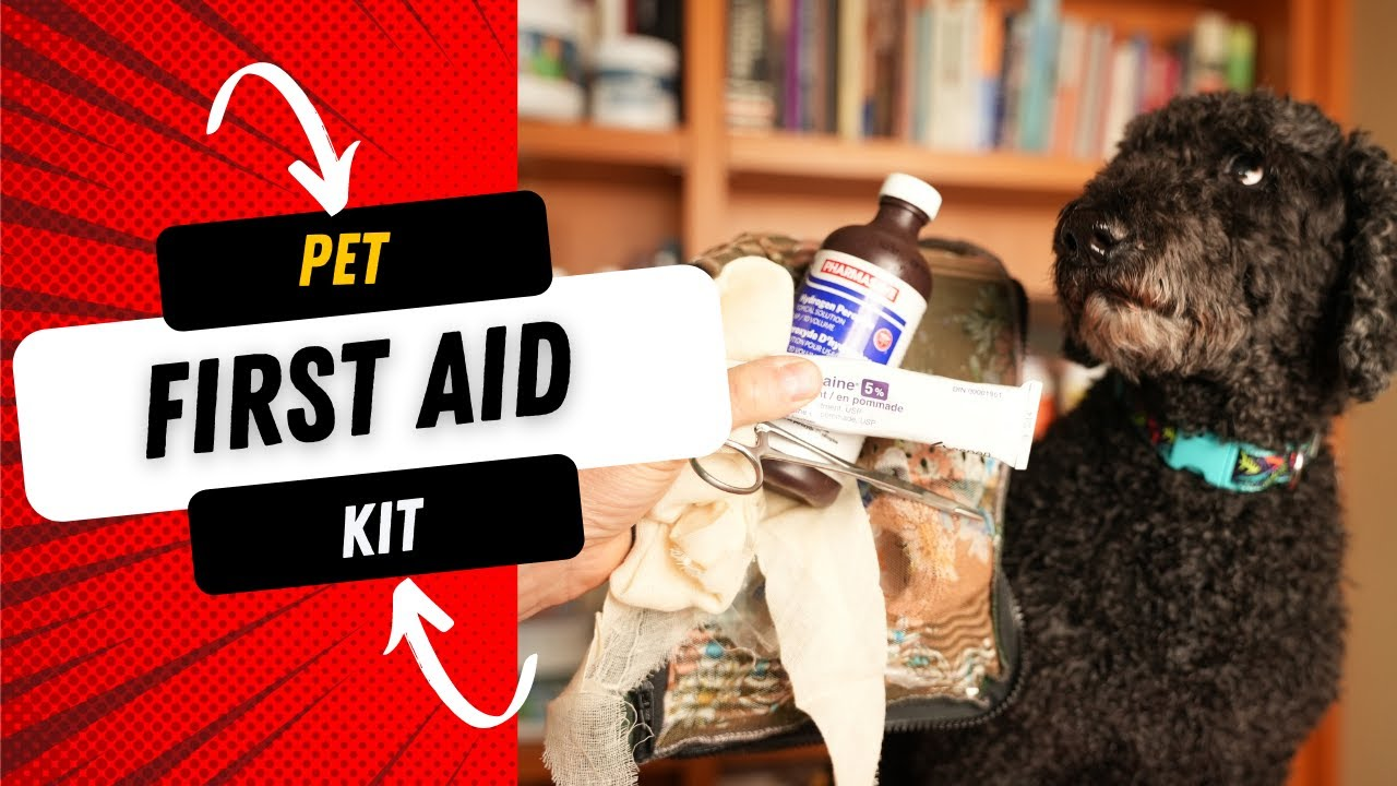 What You Need in a Pet First Aid Kit