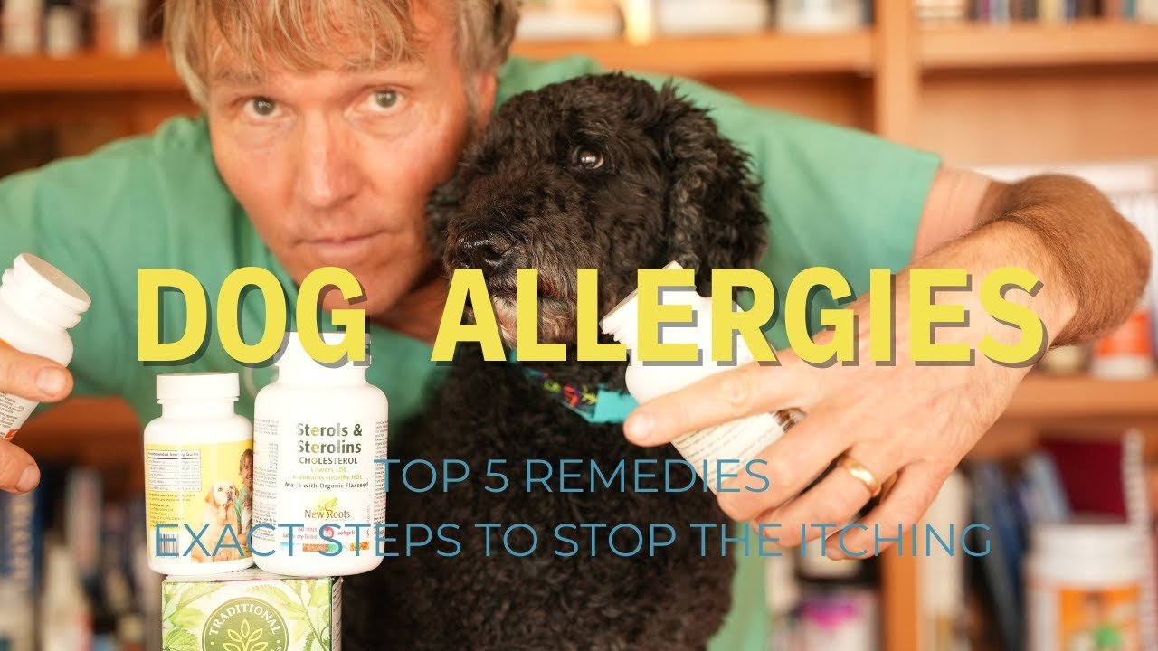 Allergies in Dogs: Top 5 Remedies to Stop the Itching