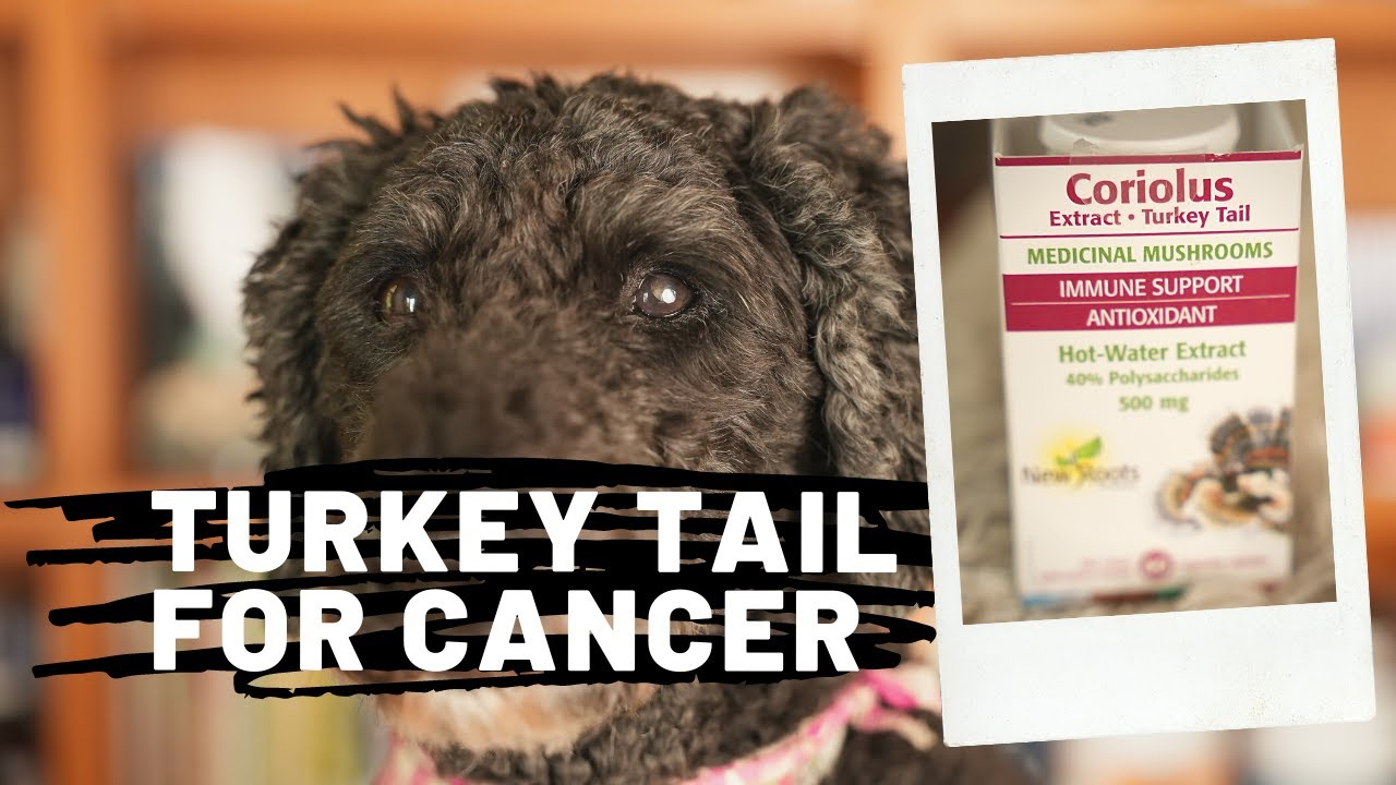 Medicinal Mushroom for Cancer in Dogs (and Cats)
